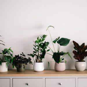 All Indoor Plants