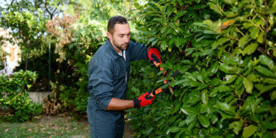 handsome young man gardener trimming hedgerow in a garden park o