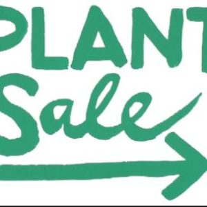 Other Plants and Items on SALE
