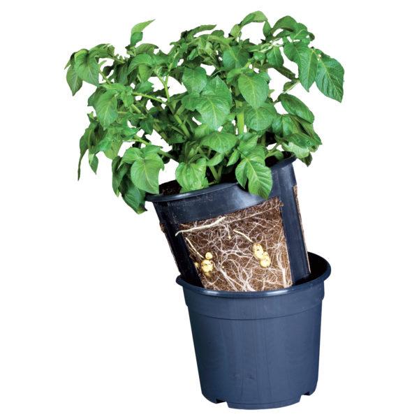 Potato Pot