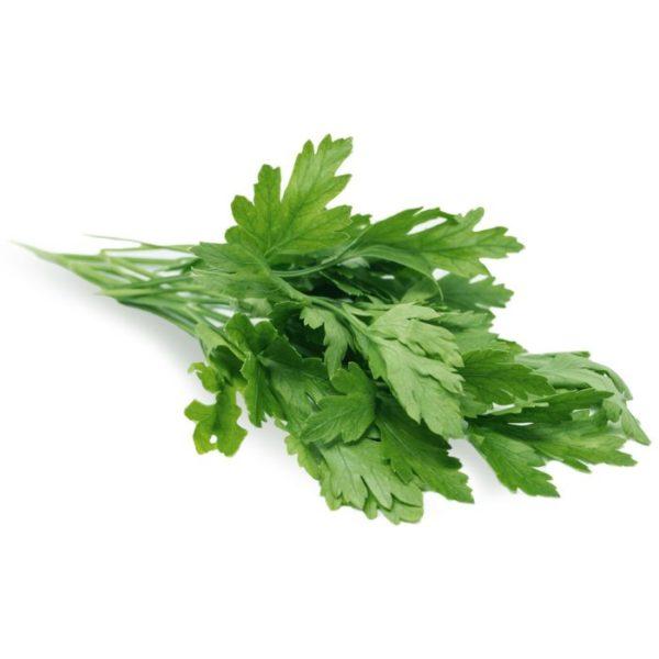 Parsley Flat Leaf