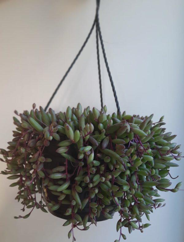string of bananas
