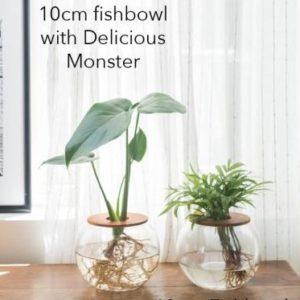 10cm fish bowl love palm