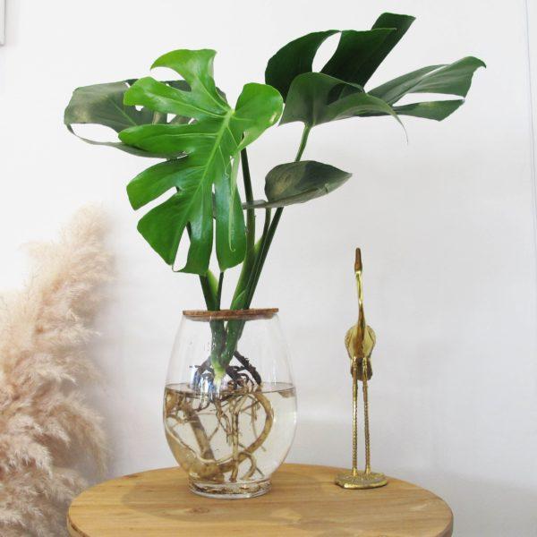 Barrel Vase with Philodendron Selloum 24cm