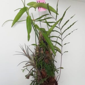 Epiphyte Log
